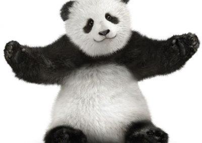 mascota baby panda